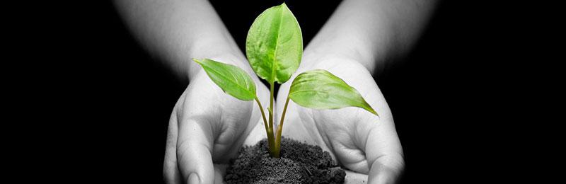 eine Pflanze wird mit zwei Händen getragen: Nachhaltigkeit – Heute schon an Übermorgen denken