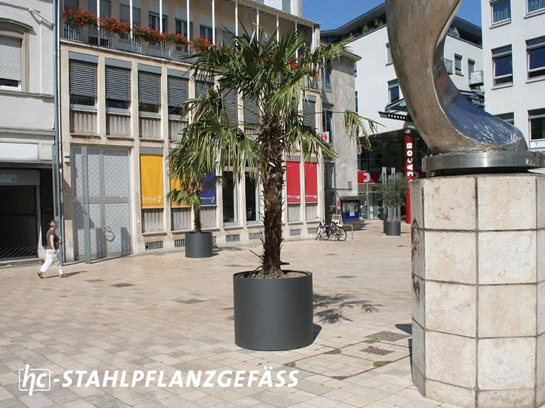 hygrocare Stahlpflanzgefäß mit Palme in Frankfurth